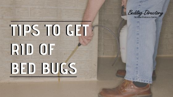 Tips to get rid of bed bugs in a mattress
