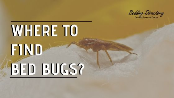 How To Get Rid Of Bed Bugs In A Mattress Bedding Directory